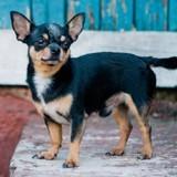 Une ado perd son chien : un inconnu appelle et les mots qu'il prononce sont insupportables