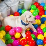 Découvrez cette incroyable crèche pour chiens qui vient d'ouvrir !
