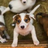 Ces refuges mettent en pause les adoptions d'animaux pendant la période des fêtes