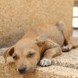Adoptare : un homme révolutionne le sort des animaux errants au Mexique