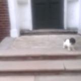 Ce chiot a la meilleure technique pour éviter les escaliers… (Vidéo du jour)