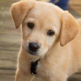 Lola, Lucky, Luna... les noms de chiens commençant par L les plus populaires