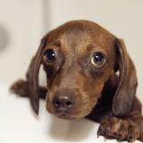 Un homme condamné à 28 ans de prison pour avoir torturé et découpé ses chiens