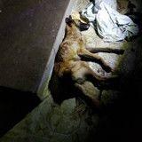 Ils laissent leur chiot de quelques mois mourir juste devant leur porte