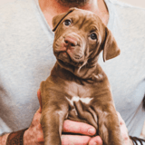 Le retour au travail accélère l'abandon des chiens achetés durant le Covid : les associations alertent