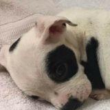 Elle trouve un chiot abandonné, va chez le vétérinaire qui comprend qu'il y a un problème