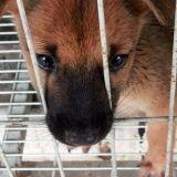 160 chiens saisis dans un élevage insalubre de Charente