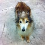 Au travail, il aperçoit un chiot mais le vétérinaire lui explique ensuite que ce n'en est pas réellement un