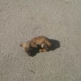 Elles voient un chiot mort au milieu de la route, en s'approchant elles poussent un cri de surprise