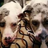Atteint d'une malformation, ce chien ne pouvait pas tenir sur ses pattes… Mais l'amour de son frère a tout changé