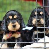 La SPA lance une pétition pour mettre fin aux ventes d'animaux dans les animaleries