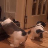 Quand deux adorables chiots apprennent à monter un escalier (Vidéo du jour)