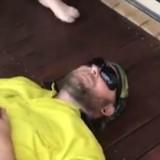 Il s'allonge par terre et plein (mais alors plein) de chiots lui sautent dessus (Vidéo du jour)