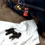 Appelés pour sauver des chiots, les pompiers comprennent vite que ce ne sont pas des chiens (Vidéo)