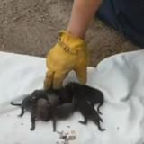 Les pompiers sont appelés pour sauver des chiots et réalisent vite leur énorme erreur