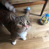 Ce chat a reçu un petit mot d'une admiratrice, et c'est vraiment adorable