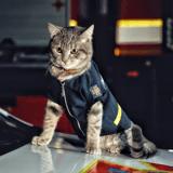 Un chat des rues sauvé par un pompier devient la mascotte de toute une caserne