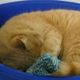 Refuge SPA de Cholet saccagé : un deuxième chat est mort