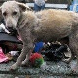 Ces chiens vivaient un enfer dans un cimetière jusqu'à l'arrivée de cette femme