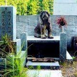 Mon chien est mort : comment réagir ?