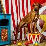 Cirques : Pour ou contre remplacer les animaux sauvages par des chiens ?
