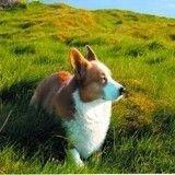 Le chien de Michel Houellebecq, star d'une exposition