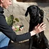 Éduquer son chien avec le clicker training : tout ce qu'il faut savoir pour commencer