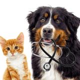 Covid-19 : La Corée du Sud lance des dépistages pour les chiens et les chats présentant des symptômes