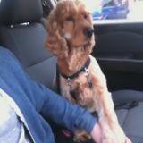 Ce chien a besoin qu'on lui tienne la patte en voiture (Vidéo du jour)