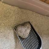 Elle nettoie la litière de son chat quand ce qu'elle voit dedans lui arrache un cri de surprise