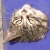 Des pompiers chinois volent au secours d'un chat piégé dans un poteau (Vidéo du jour)