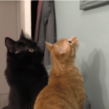 9 signes prouvant que les chats complotent pour dominer le monde (Vidéo du jour)