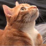 Les 10 super-pouvoirs les plus impressionnants des chats (Vidéo du jour)