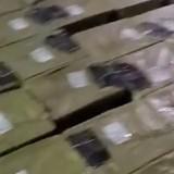 160 chatons et chiots retrouvés dans des « colis surprises » envoyés en Chine
