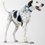 Collier GPS pour chien : ne perdez plus la trace de votre chien !