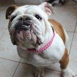 DIY : pour la Saint-Valentin, offrez un collier fait main à votre chien adoré !
