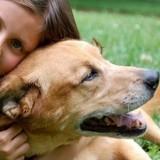 Comment caresser son chien ?