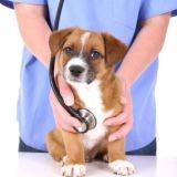 Vétérinaire : un métier passion aux mille facettes