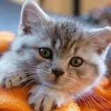 Comment bien accueillir un chaton chez soi ?