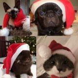 Wamiz souhaite un très joyeux Noël à tous ses lecteurs !