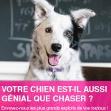Concours : dévoilez les talents de votre chien et gagnez un exemplaire du livre Chaser !