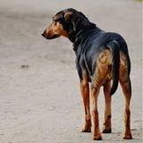 Maltraitance et abandons d'animaux : de plus en plus de condamnations pour leurs auteurs