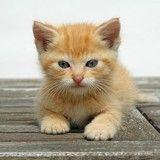 Comment déterminer l'âge d'un chaton ?