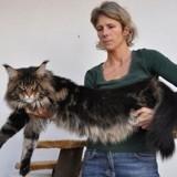 Contrôler le poids de votre chat est un casse-tête ? Un vétérinaire vous conseille !