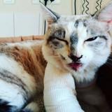 Les chroniques de Maître Terrin : Justice pour Cookie, petite chatte défenestrée deux fois