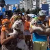 A Copacabana les chiens ont aussi leur carnaval!