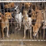 Pour la première fois, un juge sud-coréen condamne un éleveur de chiens abattus pour leur viande