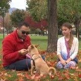Promis à l'abattoir, un chien est sauvé par une petite fille