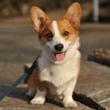 Un fichier ADN pour lutter contre les crottes de chien, une bonne idée ?