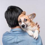 Les 7 choses qui font le plus peur aux chiens, selon la science